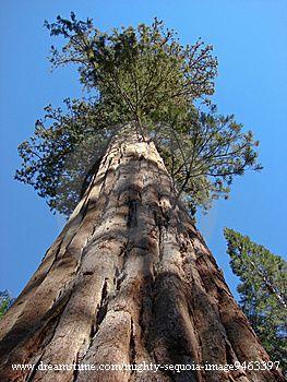 Qu'est ce qui limite la taille des arbres géants ?