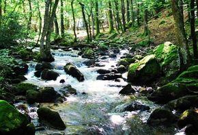 Rivière Barbenant proximité cascade pisserotte