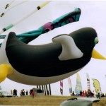pinguin volant