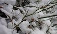 neige lundi 4 janvier 5 mini