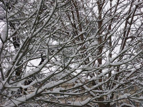 neige lundi 4 janvier 6