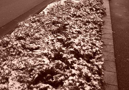 neige dernier week end de janvier 2