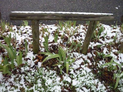 neige dernier week end de janvier 3