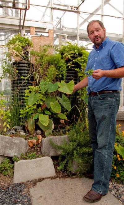 Purifier ses eaux usées grâce à des bactéries et plantes ornementales