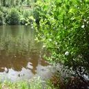 Lac d'Aubusson d'auvergne (24)