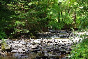 rivière-rossignolet 290