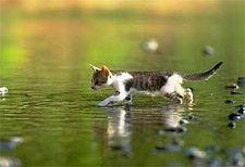 Les chats et l'eau