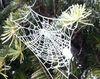 Toiles d'araignées givrées
