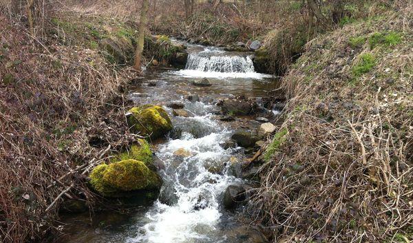 L'Artière de Boisséjour amont confluence (1)