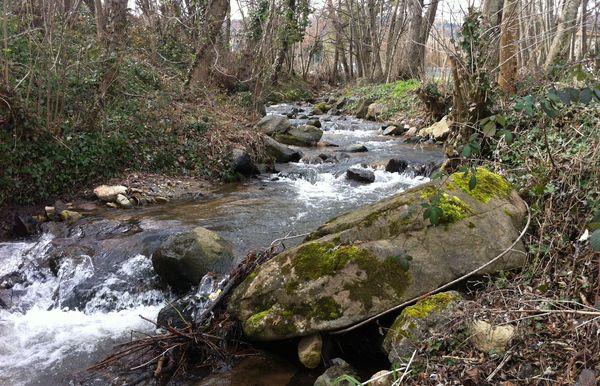 L'Artière de Boisséjour amont confluence