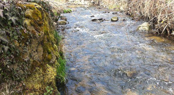 L'Artière de Saint Genés amont confluence (2)