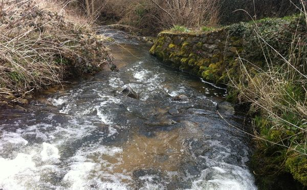 L'Artière de Saint Genés amont confluence (3)