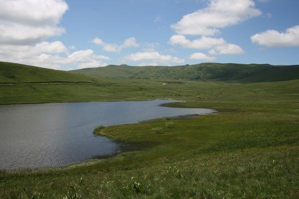 lac saint Alyre Tourbière 600