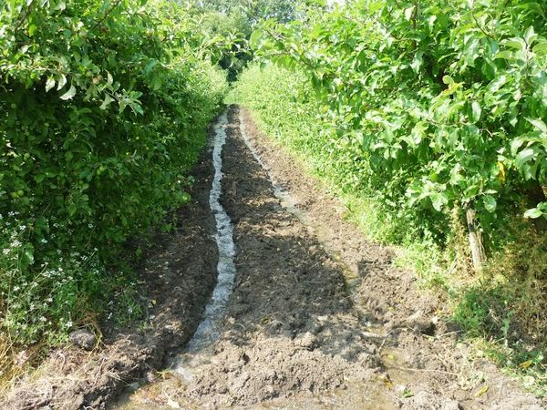 Irrigation vallée du Bédat
