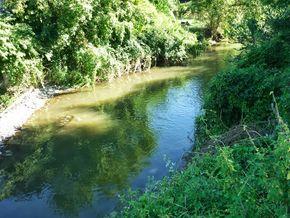 confluence Bédat Morge (2) 290