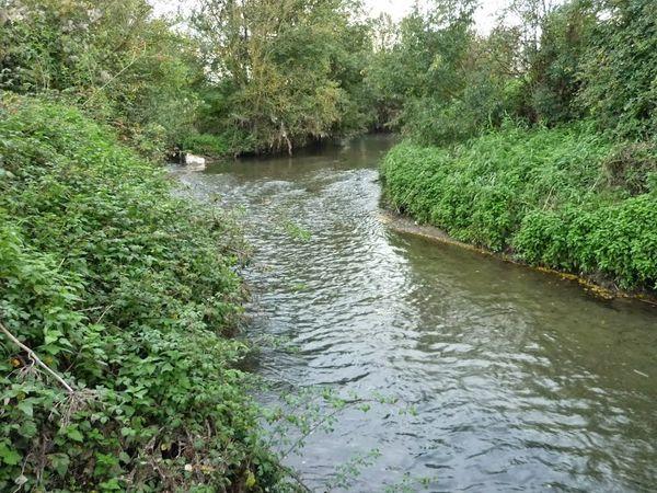Confluence Bédat ruisseau des Guelles (10)
