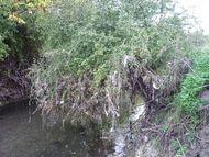 Confluence Bédat ruisseau des Guelles (11) 190