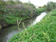 Confluence Bédat ruisseau des Guelles (15) 190