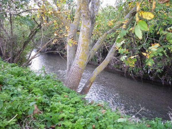 Confluence Bédat ruisseau des Guelles (16)