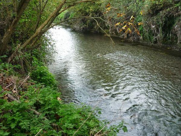 Confluence Bédat ruisseau des Guelles (18)