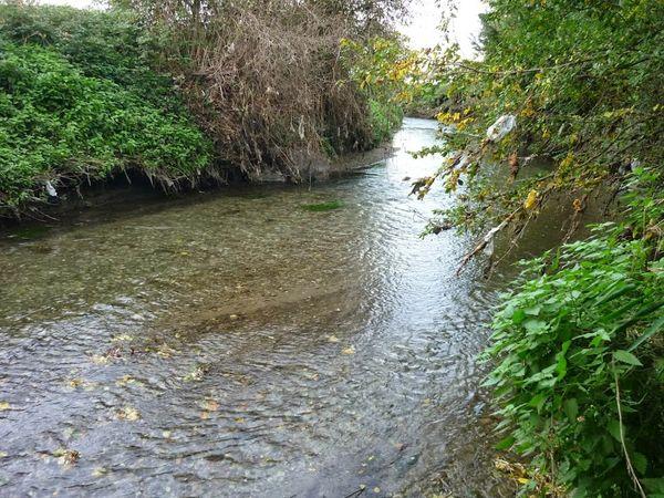 Confluence Bédat ruisseau des Guelles (19)