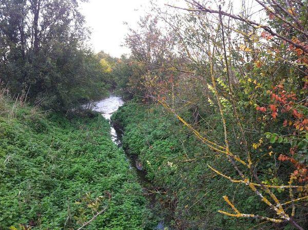 La confluence entre le Bédat et le ruisseau des Guelles