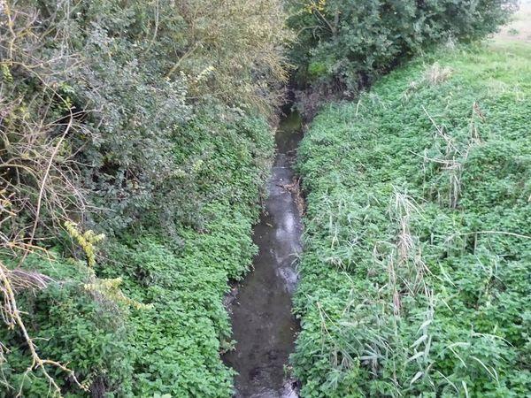 Confluence Bédat ruisseau des Guelles (9)