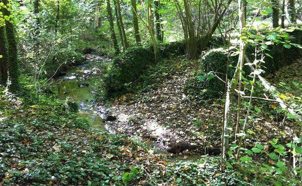 Ruisseau de l'Adrienne (1)