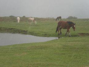 chevaux lascours 290