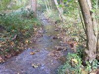 ruisseau de l'Adrienne amont Sayat1