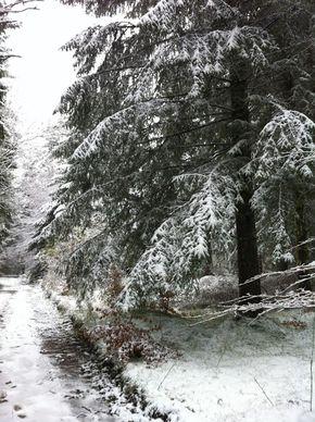 Neige Bois de Rochetoux Laschamps (1) 290