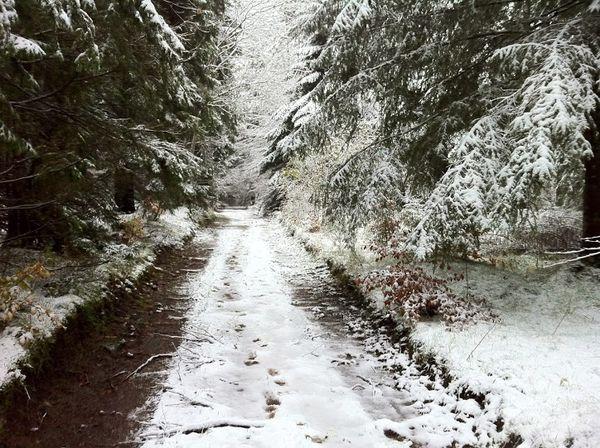 Neige Bois de Rochetoux Laschamps (2)