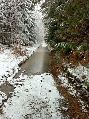 Neige Bois de Rochetoux Laschamps (3) 290