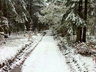 Neige Bois de Rochetoux Laschamps (4) 190. jpg