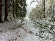 Neige Bois de Rochetoux Laschamps (6) 190