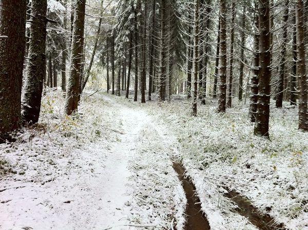 Neige Bois de Rochetoux Laschamps (7)