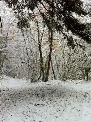 Neige Bois de Rochetoux Laschamps (8) 290