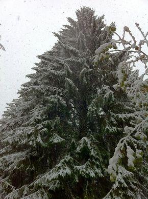 Neige Bois de Rochetoux Laschamps (9) 290