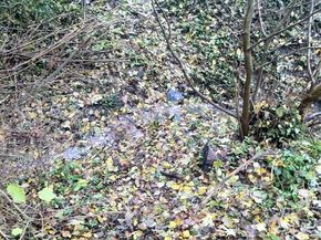 Ruisseau cheval Fontbeloux (8) 290