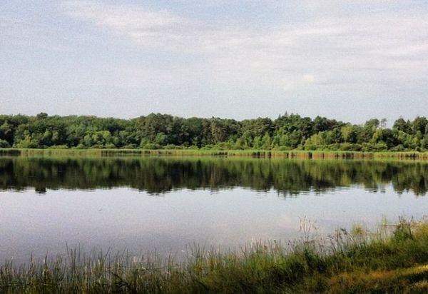 étang forêt de tronçais