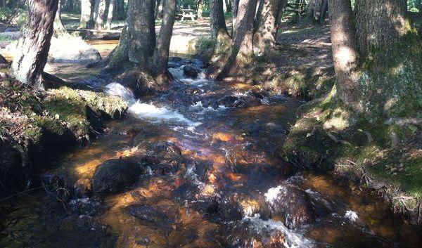 Le Couzon : rivière du Forez