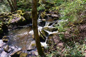 ruisseau de Gelles amont cascade rive gauche