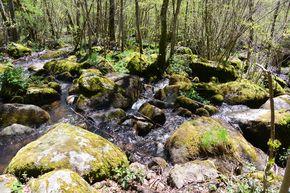 ruisseau de gelles aval de la cascade (1)