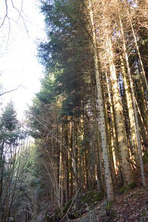 Arboretum Royat