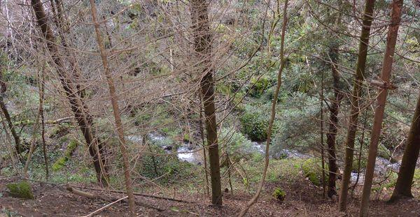 ruisseau de Vaucluse arboretum royat