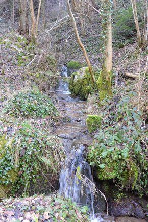 ruisseau de Vaucluse royat arboretum