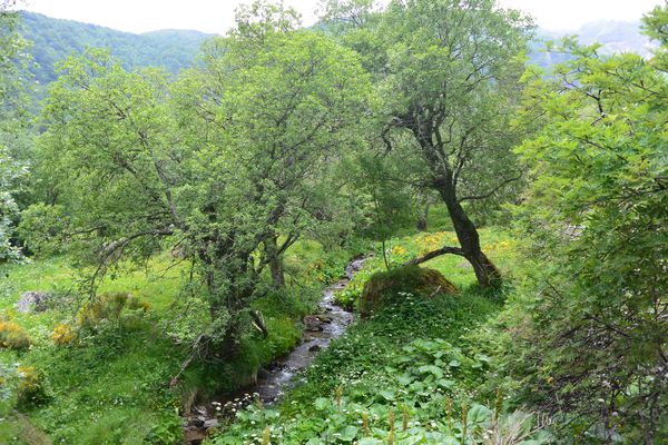 ruisseau Vallée de Chaudefour