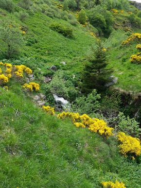ruisseau du salin (1) 290