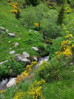 ruisseau du salin 290