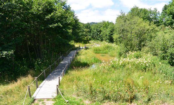 chemin en bois zone humide Saint Genés Champanelle